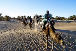 Kameltour, Sahara, Marokko
