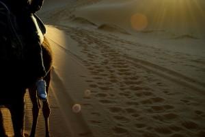 Kamel, Marokko