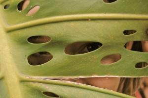 see through leaf