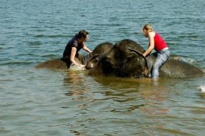 Bathing elephants, Thailand