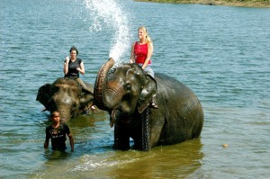 bathing elephants, Thailand