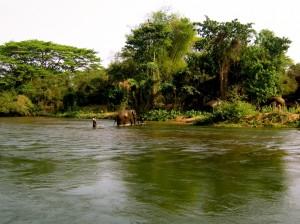 Volunteering with Wildlife Friends of Thailand