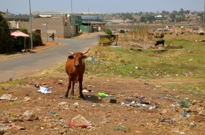 rubbish in soweto