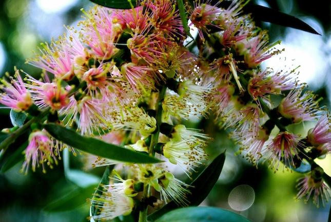 crazy flower, Sydney