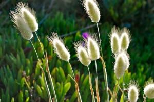 Grass, Australien