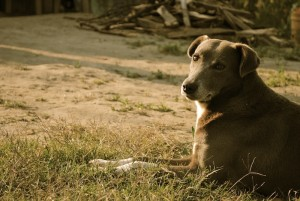 dog, Mexico