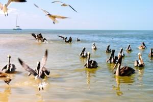 Vogelinsel Isla Holbox