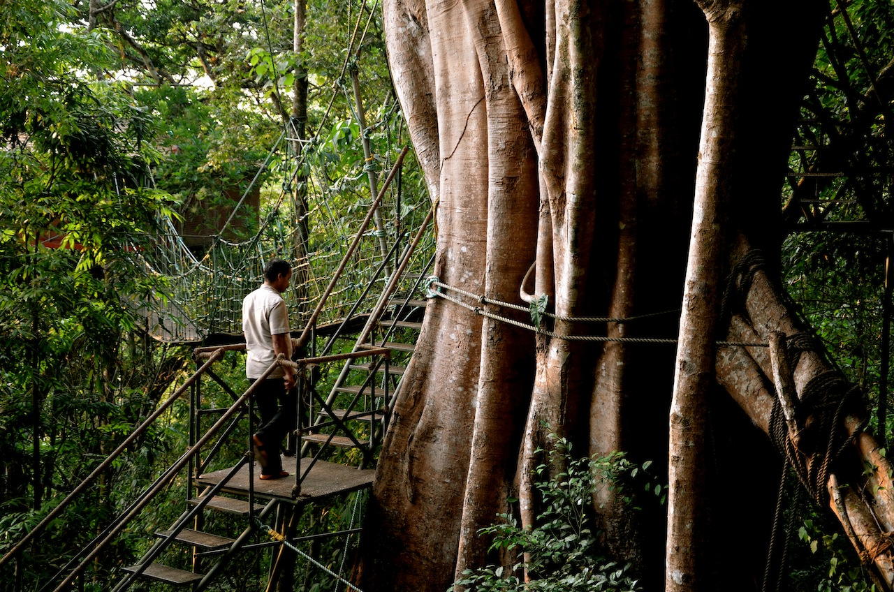 tree house, vithiri resort, wayanad, india