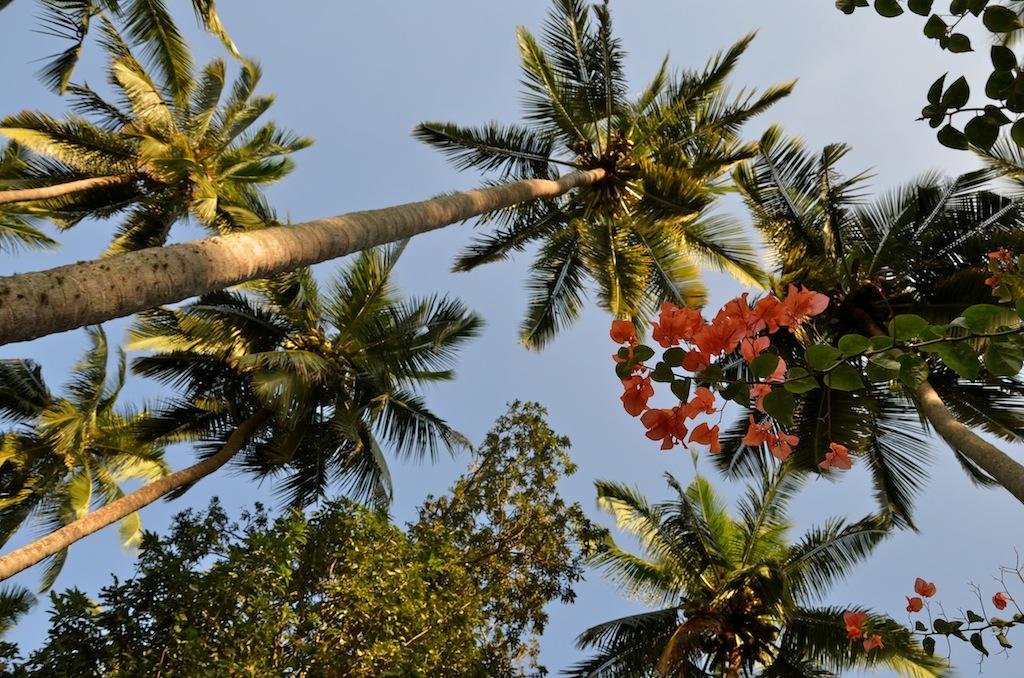 palm trees, kerala