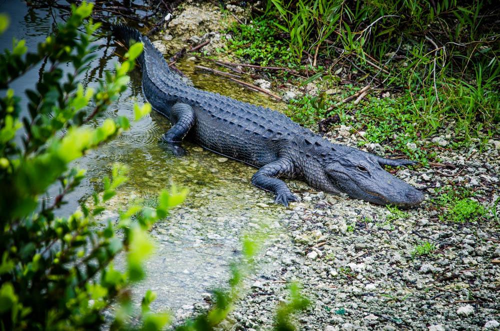 Everglades, Florida