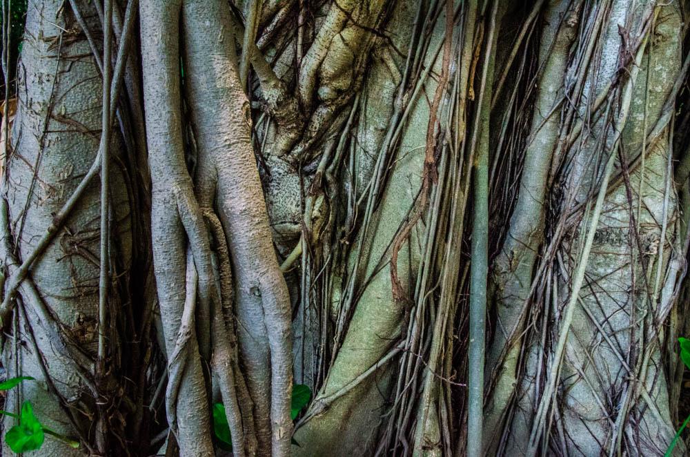 Miami botanical garden, tree