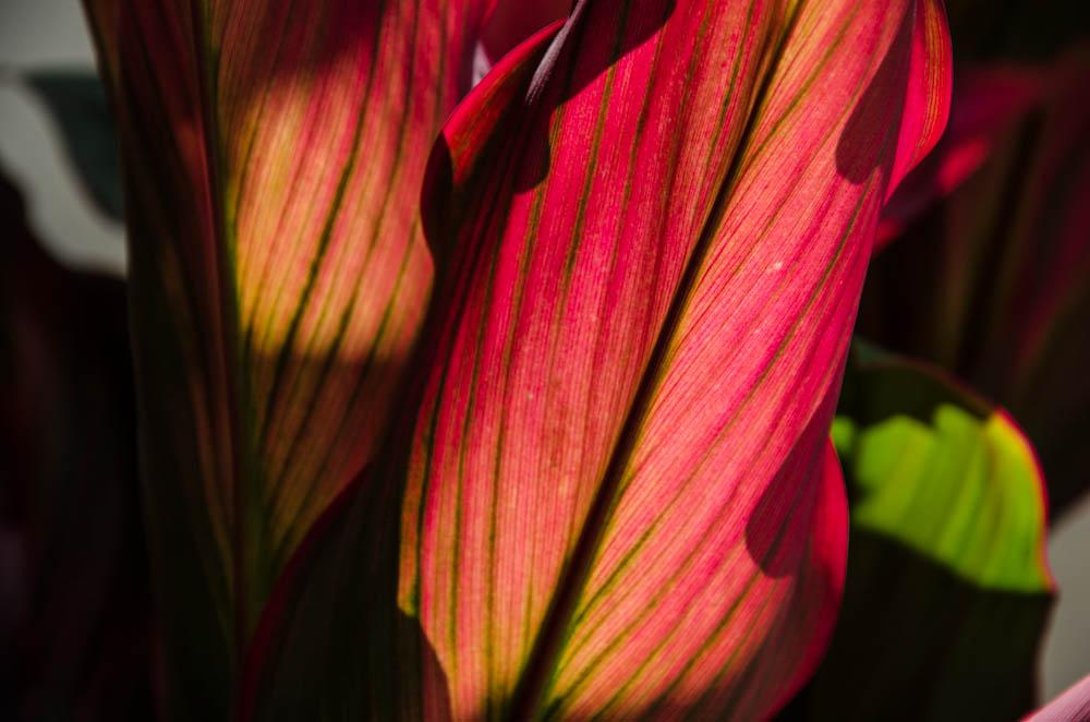 Miami botanischer Garten, leaf