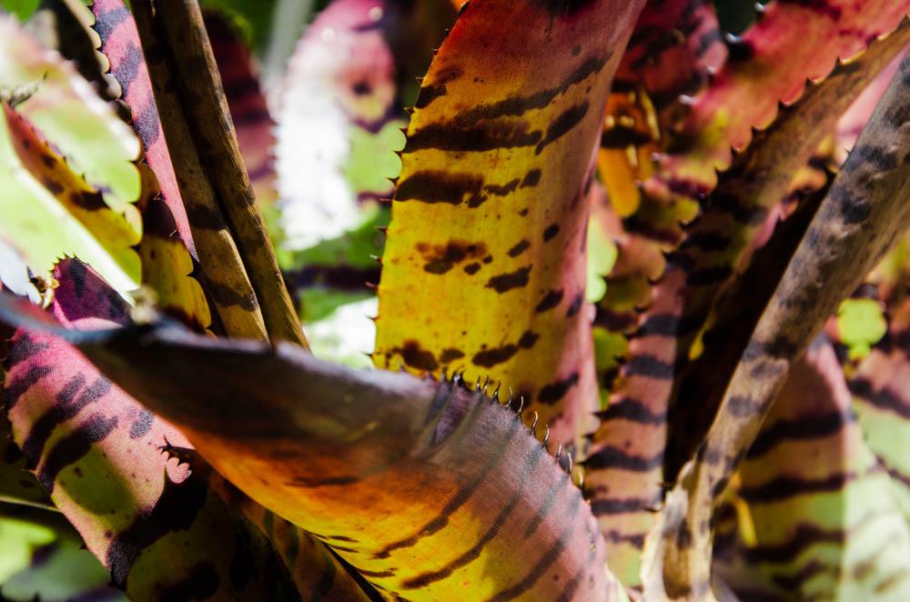 Miami botanischer Garten