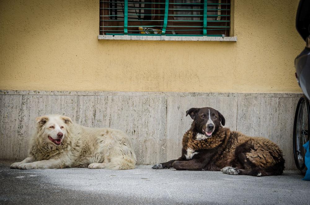 Hunde, Cannole, Apulien