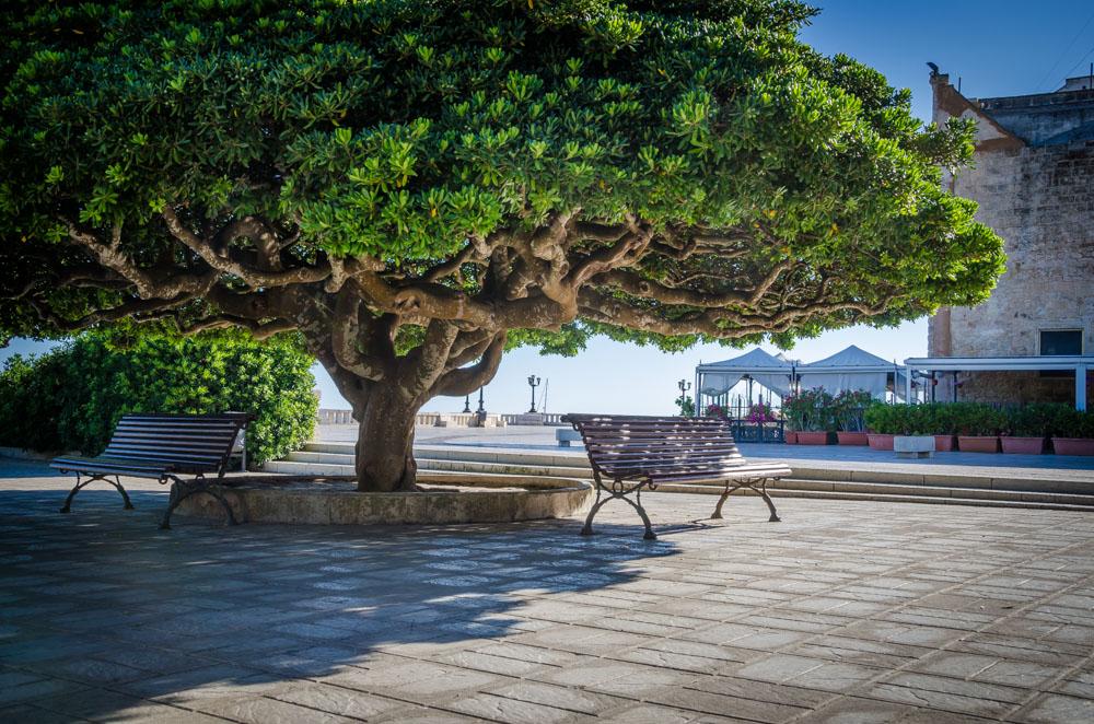 Baum, Bank, Otranto