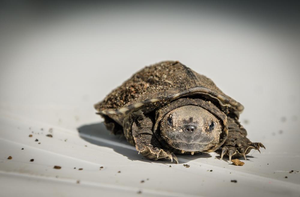 baby turtle, Benito Juarez, Veracruz