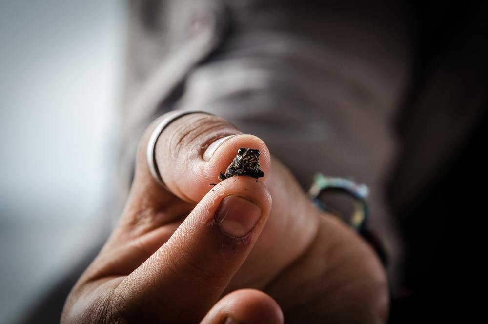 tiny frog, Benito Juarez, Veracruz