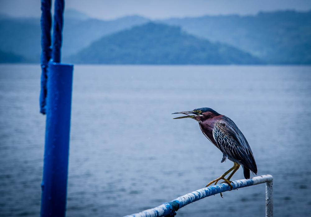 bird, Laguna de Catemaco