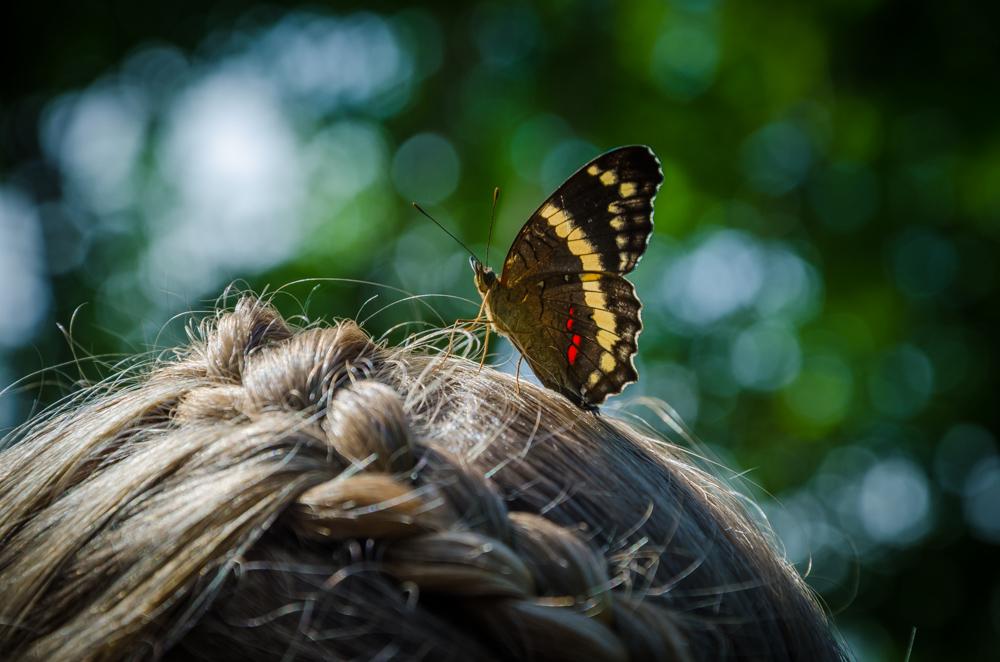 butterfly, Benito Juarez, Veracruz