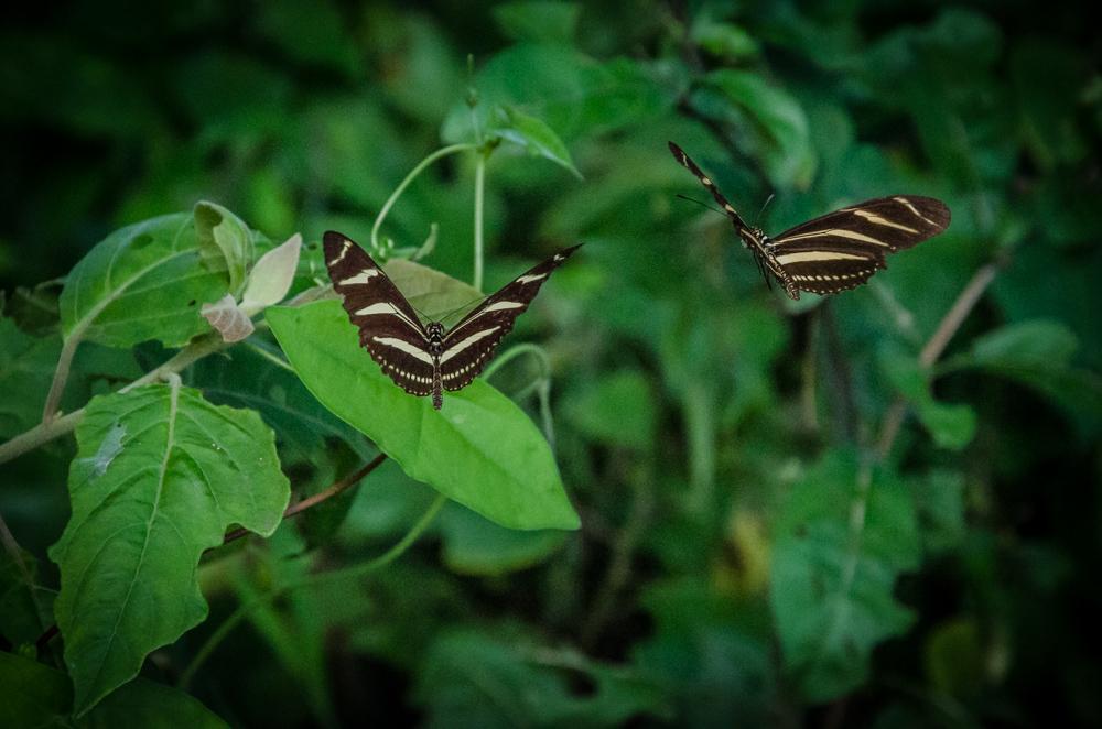 butterflies, Benito Juarez, Veracruz