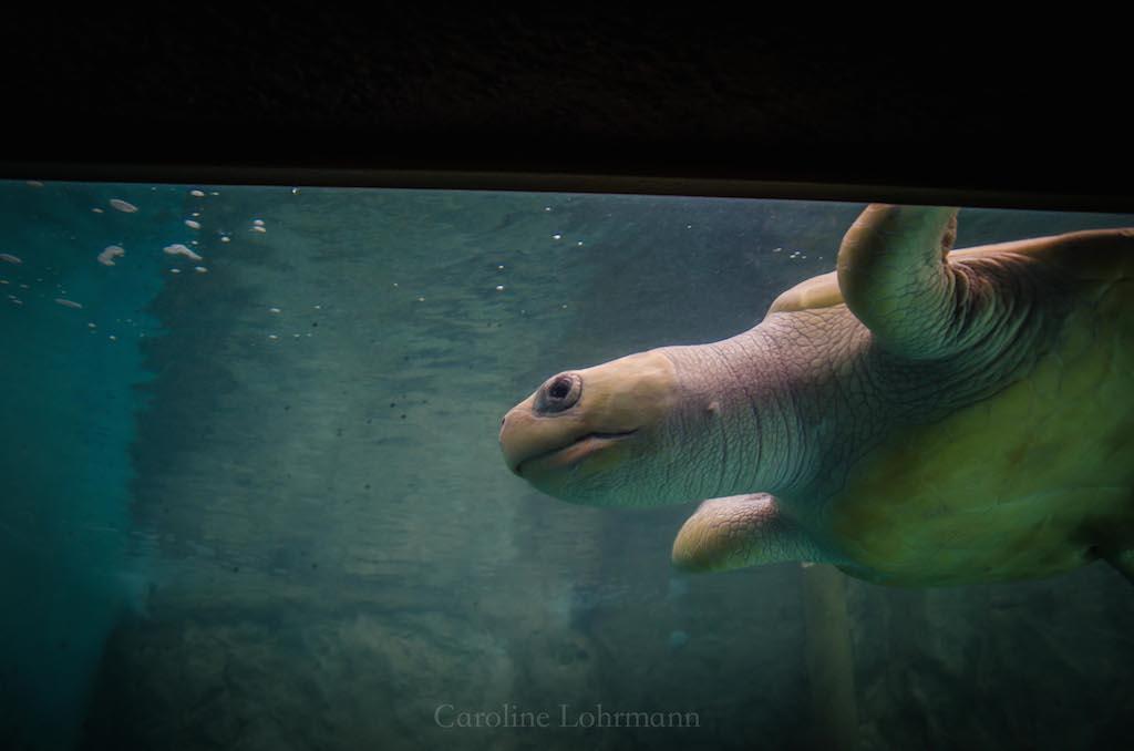 Schildkröte Mazunte