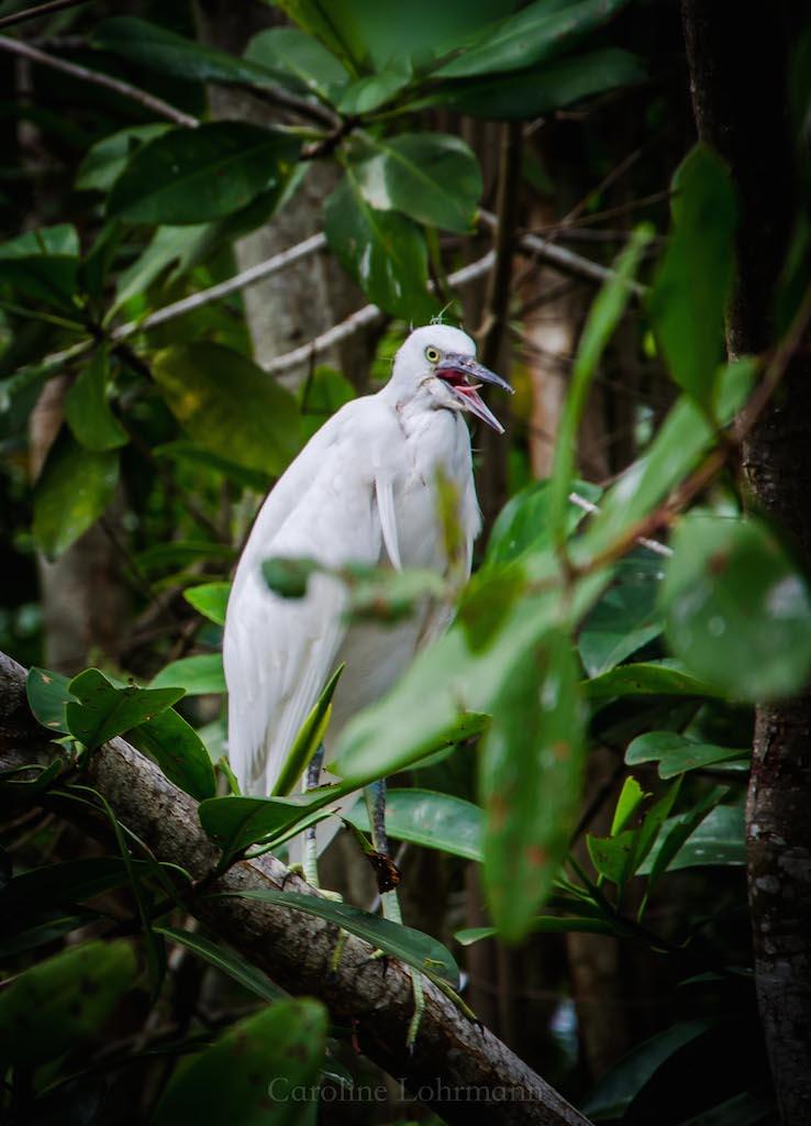 Vogel Ventanillas