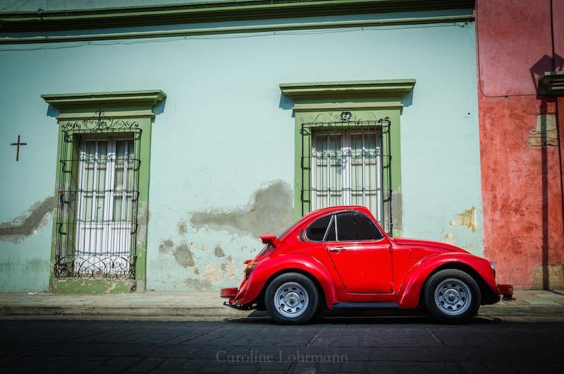 Käfer Oaxaca