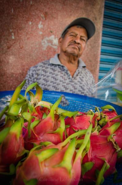 Drachenfrucht Oaxaca