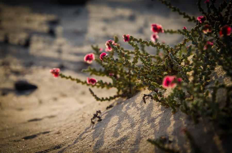 Parque Natural de las Dunas Fuerteventura