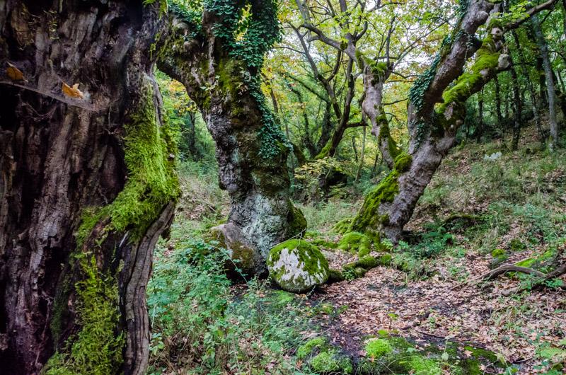 Meteora Wald