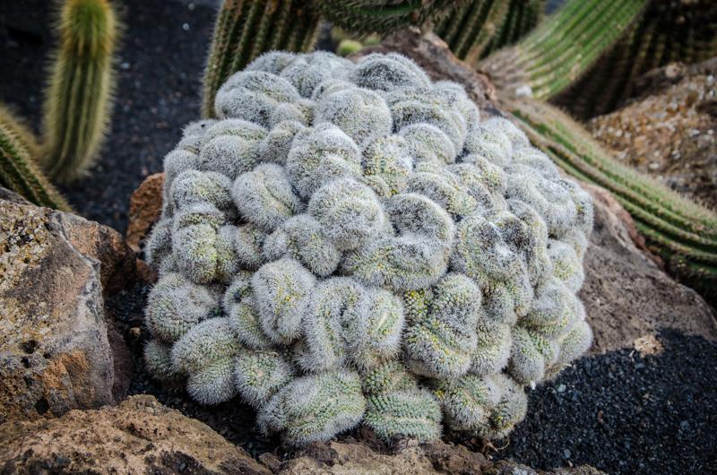 Jardin de Kaktus Lanzarote