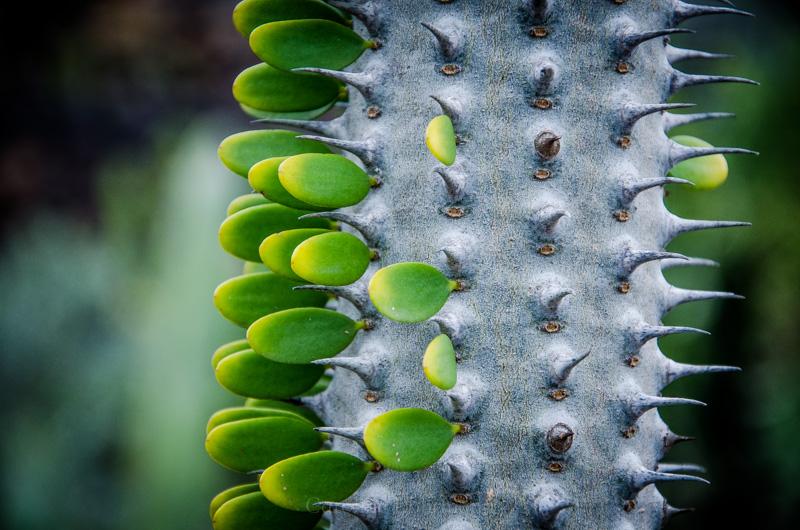 Kaktusgarten Lanzarote