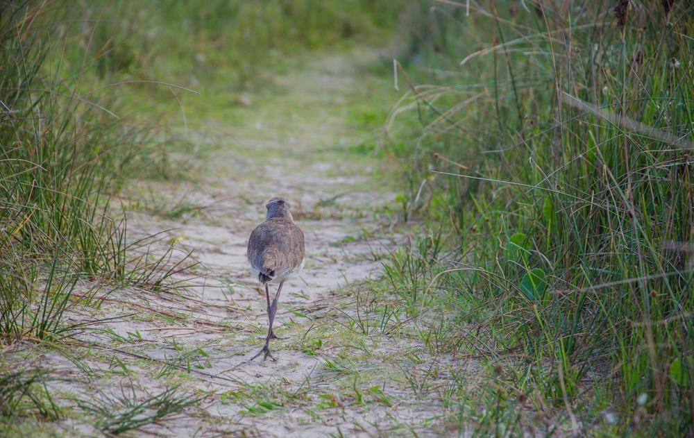 Vogel Cabo Polonio