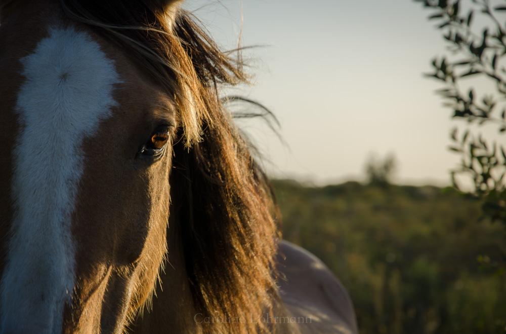 Pferd Uruguay
