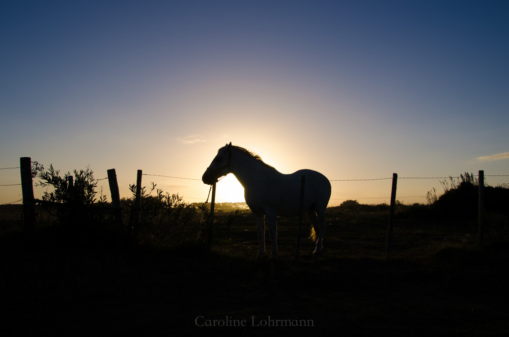 Pferd vor Sonnenuntergang