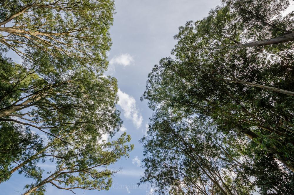 Uruguay Bäume