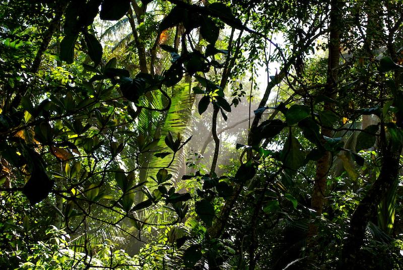 Dschungel Cahuita